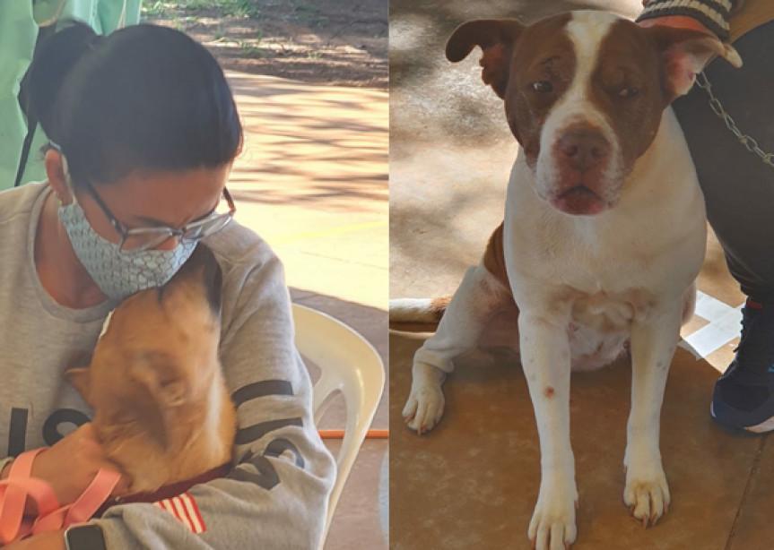 Julho Dourado é o mês de reflexão e promoção de eventos sobre a saúde de animais.